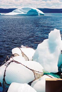 Ice Chunks in Nets, Floating