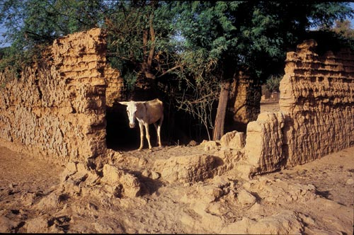 Ancient-looking walls define the footprint of a small structure. It has no roof, and a couple of trees grow within. An emaciated donkey stands within, perhaps seeking refuge in the shade. The inside can be seen only because the corner of the wall is missing, lumps on the ground indicating that it has collapsed, the components beginning to be reclaimed by the earth.