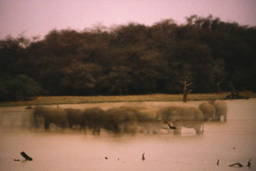 A time-lapse photo of a lake shows shadowy, blurry, ghost-like images of elephants as they move about in the water.