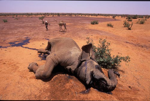 A dead elephant sprawls across the red, flat earth. Fluids leak from every orifice, wetting the dusty ground.