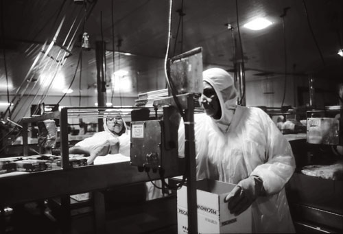 Workers at the Acuinova factory pack boxes of canned salmon for shipment around the world.
