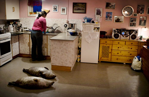 Hansigne Thomassen working in her kitchen in Greenland.  Two seals lay on the floor awaiting preparation.
