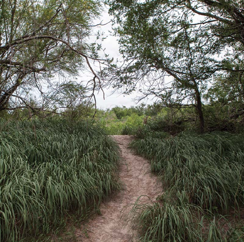 A well-worn path leading from the Rio Grande into the Santa Ana National Wildlife Refuge.