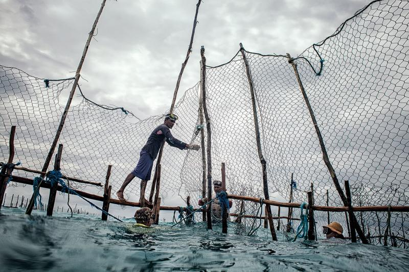 In Bitupitá, fishermen build underwater corrals with wood beams and steel fencing, setting them as far as seven miles offshore. Their work involves long days in almost any weather, with few tools other than nets and snorkeling gear.