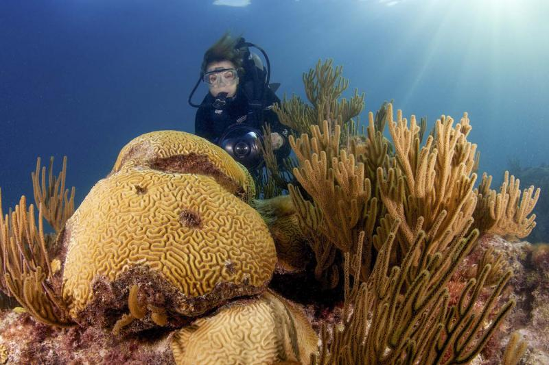 Dr. Earle observing a coral reef in Bermuda in 2010. (Bryce Groark)