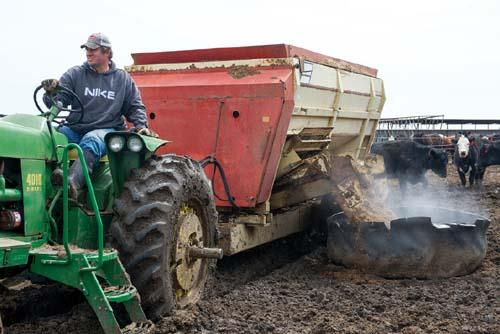 Jim Tarnick feeds his cattle corn silage and distiller's grain on his farm in Fullerton, Nebraska.