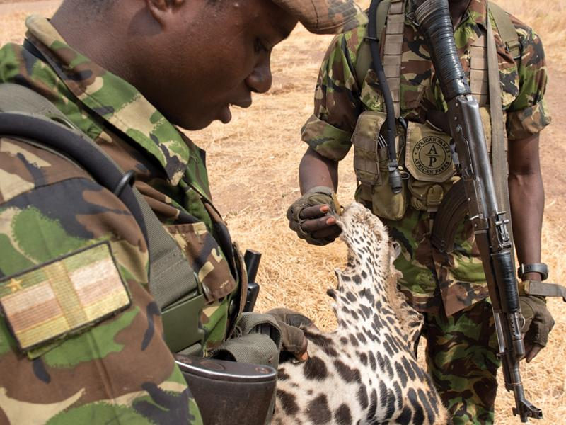 Lieutenant Ponce Pilate Mbenga, a Central African Army officer with the Chinko Project, looks on as one of the rangers examines a leopard skin confiscated from Mbororo poachers during a camp raid.