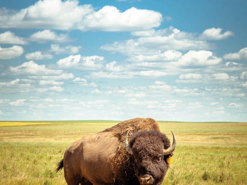 "Five Diamond Bison Ranch. Wolf Pointe, MT, 2009. From Lauren Grabelle's ""Surveilling the West."""