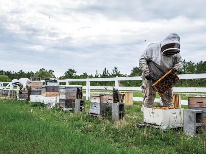A beehive of Silver Spoon Apiaries, in Brunswick County, NC