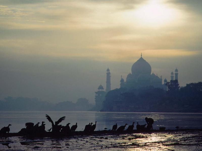 Before the recent species collapse, vultures were a vital part of India's sanitation, cleaning carcasses and, as here, scavenging human remains left at the burning ghats on the banks of rivers. (Adam Woolfi TT / Corbis)